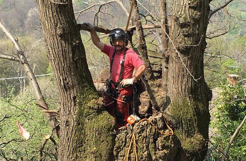 Arboricoltura Tree Climbing